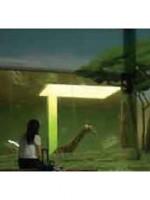 Giraffe & Africa